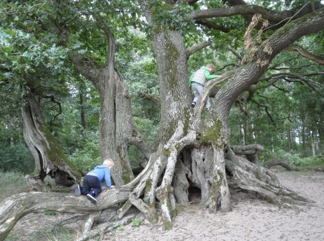 Barn i träd