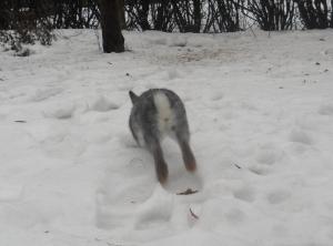 Glad Kanin på rymmen i snön