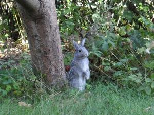 indignerad kanin