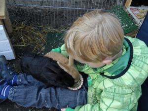 kaninungar i knät på lillhusse