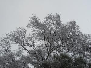 Vintervilande träd iklädda frosttäcke. Så vackert.